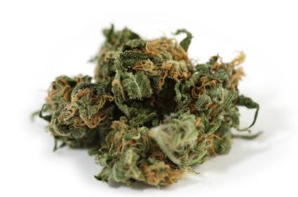 nuggets of Marijuana
